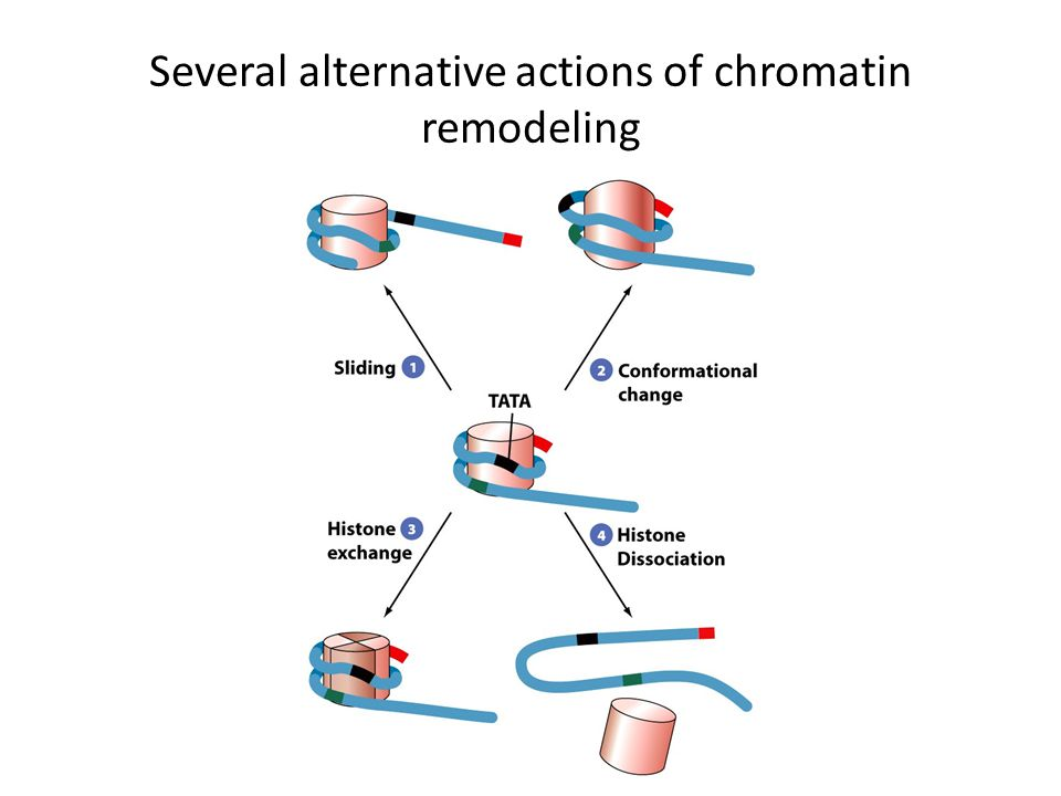 Several alternative actions of chromatin remodeling