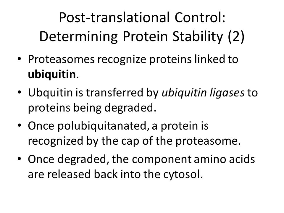 Post-translational Control: Determining Protein Stability (2) Proteasomes recognize proteins linked to ubiquitin.