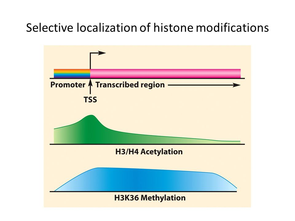 Selective localization of histone modifications
