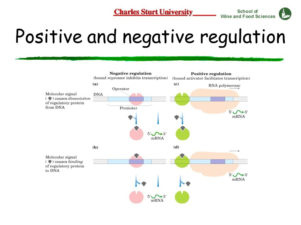 Positive and negative regulation