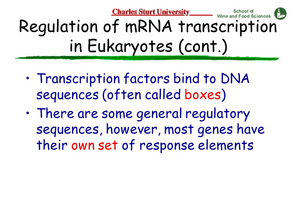 Regulation of mRNA transcription in Eukaryotes (cont.) Transcription factors bind to DNA sequences (often called boxes) There are some general regulatory sequences, however, most genes have their own set of response elements