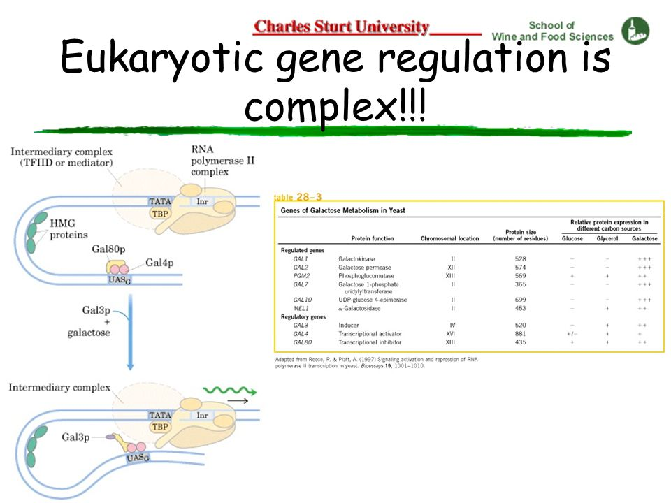 Eukaryotic gene regulation is complex!!!