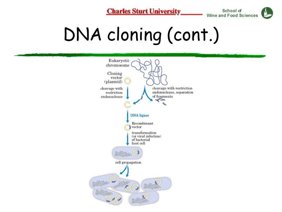 DNA cloning (cont.)