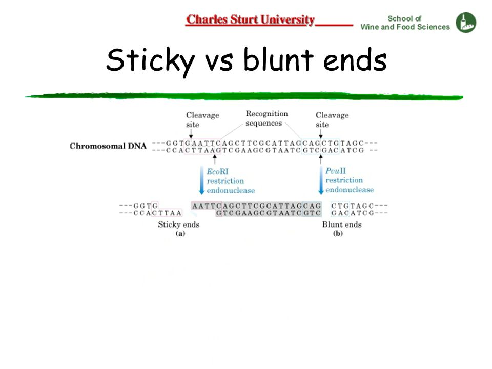 Sticky vs blunt ends