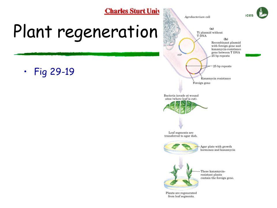 Plant regeneration Fig 29-19