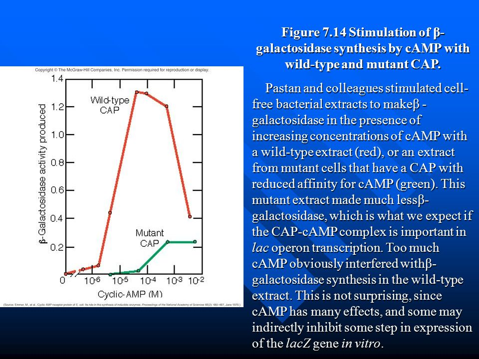 Figure 7.14 Stimulation of β- galactosidase synthesis by cAMP with wild-type and mutant CAP. Pastan and colleagues stimulated cell- free bacterial ext