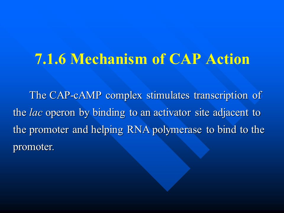 7.1.6 Mechanism of CAP Action The CAP-cAMP complex stimulates transcription of the lac operon by binding to an activator site adjacent to the promoter