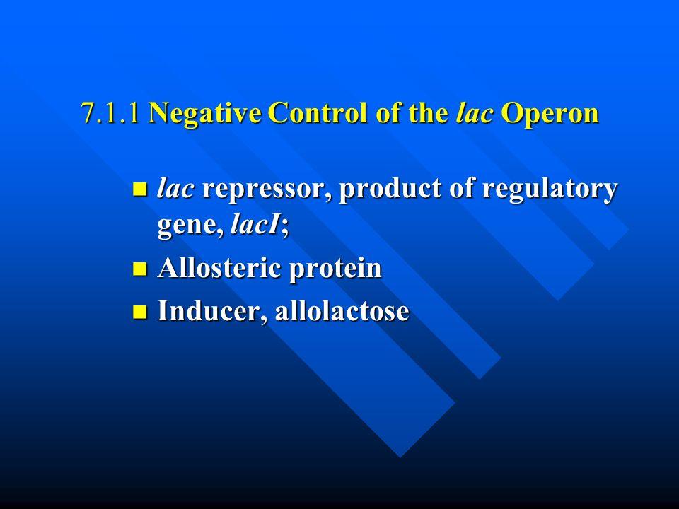7.1.1 Negative Control of the lac Operon lac repressor, product of regulatory gene, lacI; lac repressor, product of regulatory gene, lacI; Allosteric