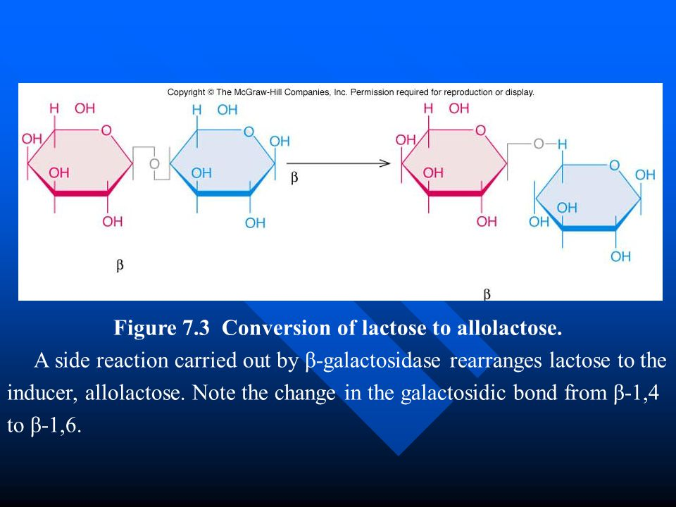 Figure 7.3 Conversion of lactose to allolactose. A side reaction carried out by β-galactosidase rearranges lactose to the inducer, allolactose. Note t
