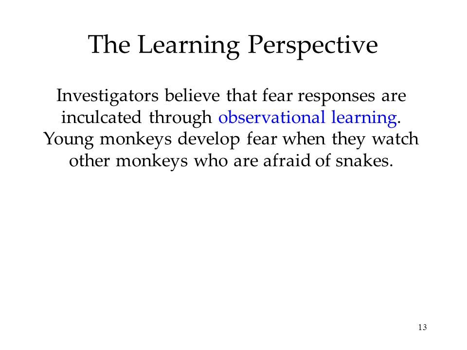 13 The Learning Perspective Investigators believe that fear responses are inculcated through observational learning. Young monkeys develop fear when t