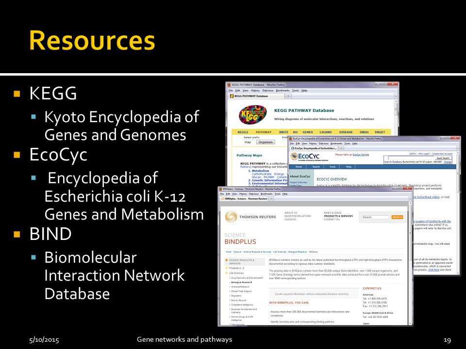  KEGG  Kyoto Encyclopedia of Genes and Genomes  EcoCyc  Encyclopedia of Escherichia coli K-12 Genes and Metabolism  BIND  Biomolecular Interaction Network Database 5/10/201519Gene networks and pathways