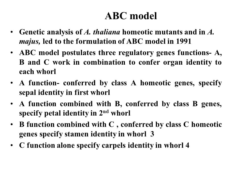 ABC model Genetic analysis of A. thaliana homeotic mutants and in A.