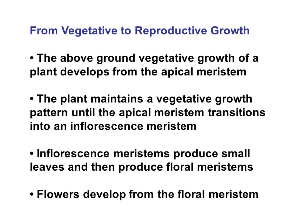 The Signal to Flower In order for flowers to develop two important genetic changes must occur 1.