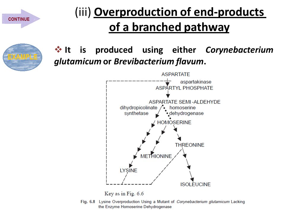 (iii) Overproduction of end-products of a branched pathway  It is produced using either Corynebacterium glutamicum or Brevibacterium flavum.