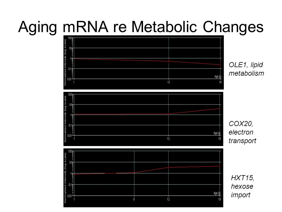 Aging mRNA re Metabolic Changes OLE1, lipid metabolism COX20, electron transport HXT15, hexose import