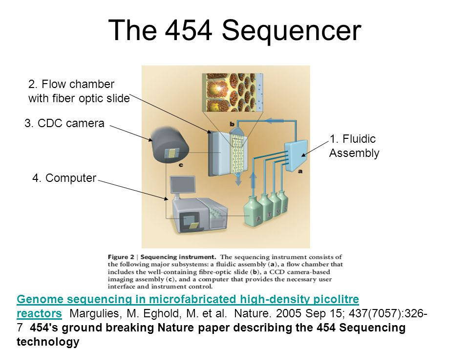 The 454 Sequencer Genome sequencing in microfabricated high-density picolitre reactorsGenome sequencing in microfabricated high-density picolitre reac