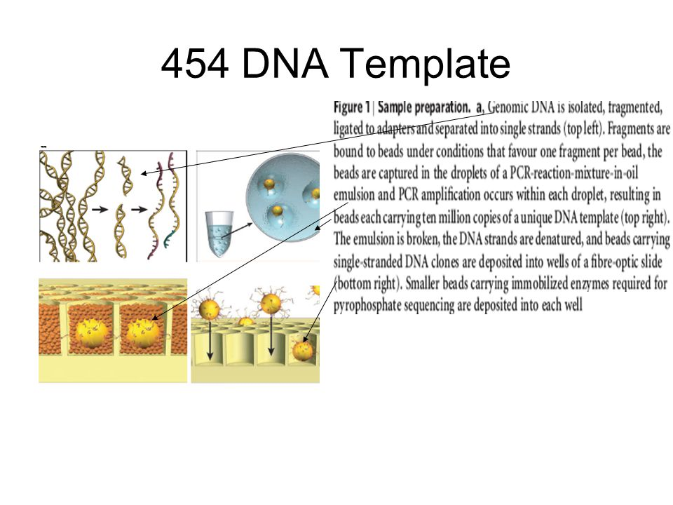 454 DNA Template