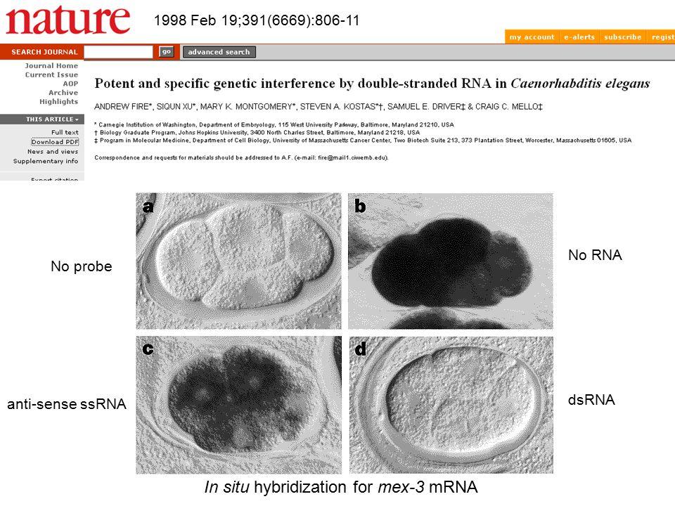 In situ hybridization for mex-3 mRNA No probe anti-sense ssRNA No RNA dsRNA 1998 Feb 19;391(6669):806-11