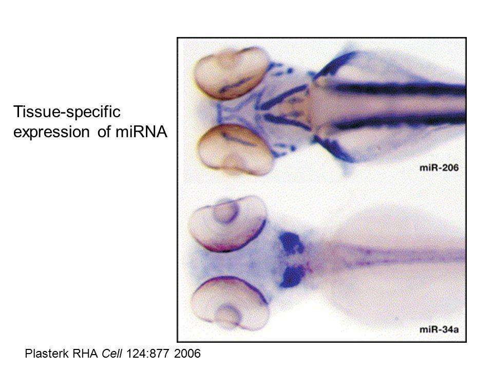 Plasterk RHA Cell 124:877 2006 Tissue-specific expression of miRNA