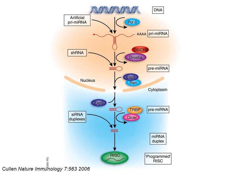 Cullen Nature Immunology 7:563 2006