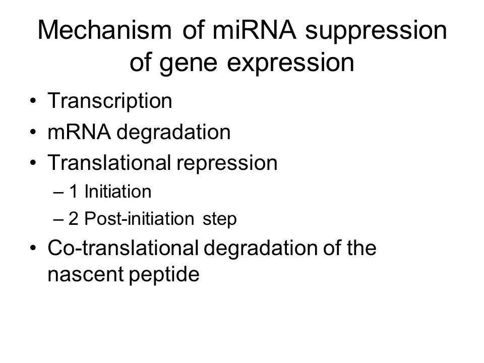 Mechanism of miRNA suppression of gene expression Transcription mRNA degradation Translational repression –1 Initiation –2 Post-initiation step Co-translational degradation of the nascent peptide