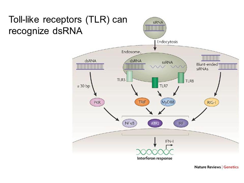Toll-like receptors (TLR) can recognize dsRNA