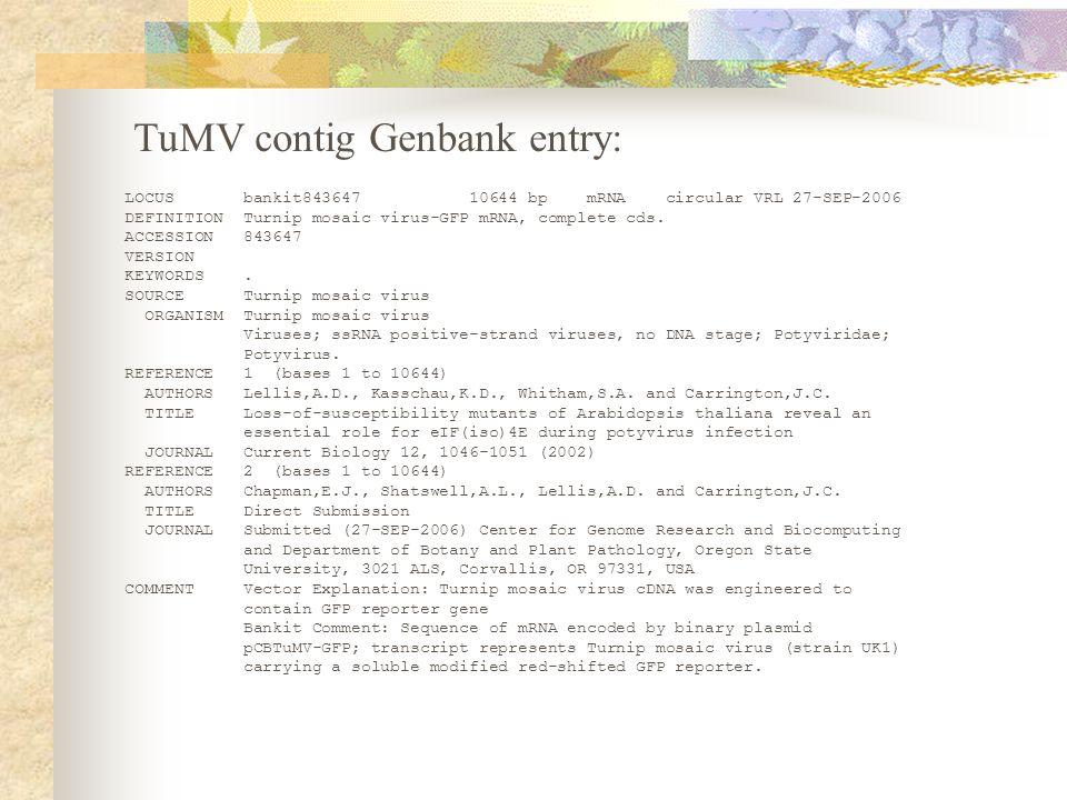 LOCUS bankit843647 10644 bp mRNA circular VRL 27-SEP-2006 DEFINITION Turnip mosaic virus-GFP mRNA, complete cds.