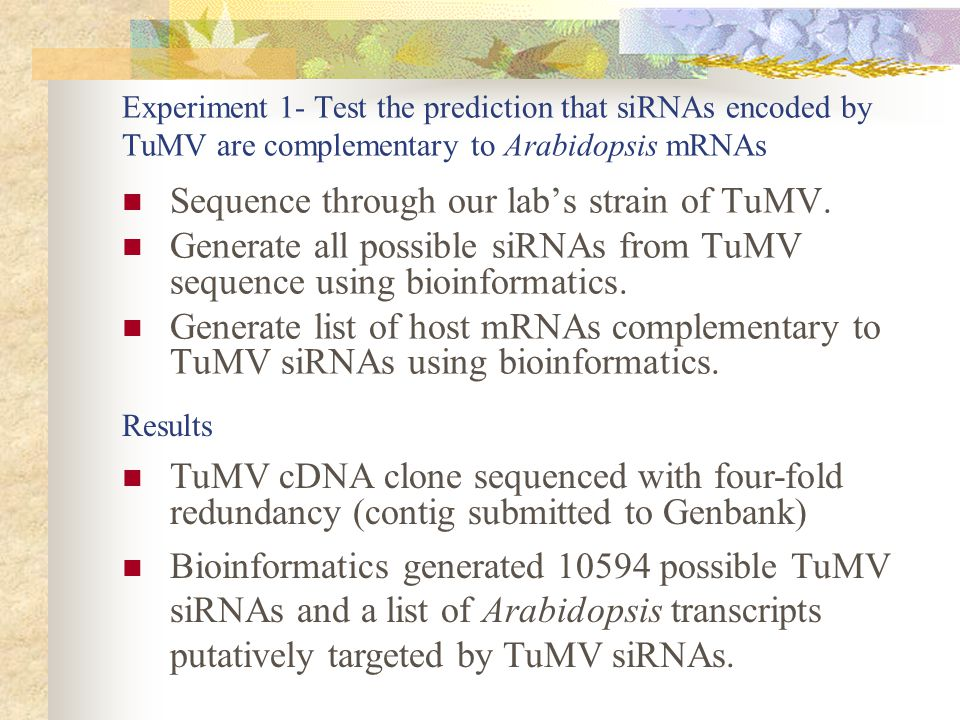 Experiment 1- Test the prediction that siRNAs encoded by TuMV are complementary to Arabidopsis mRNAs Sequence through our lab's strain of TuMV.