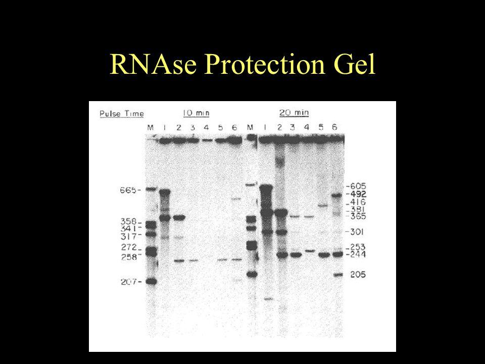 RNAse Protection Gel