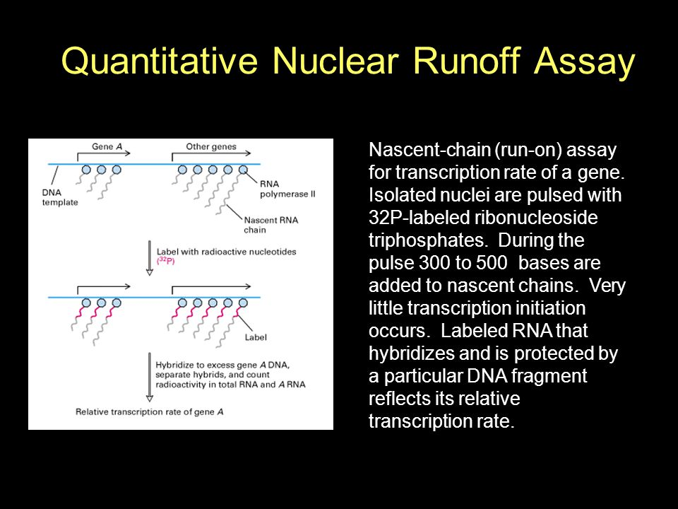 Quantitative Nuclear Runoff Assay Nascent-chain (run-on) assay for transcription rate of a gene.