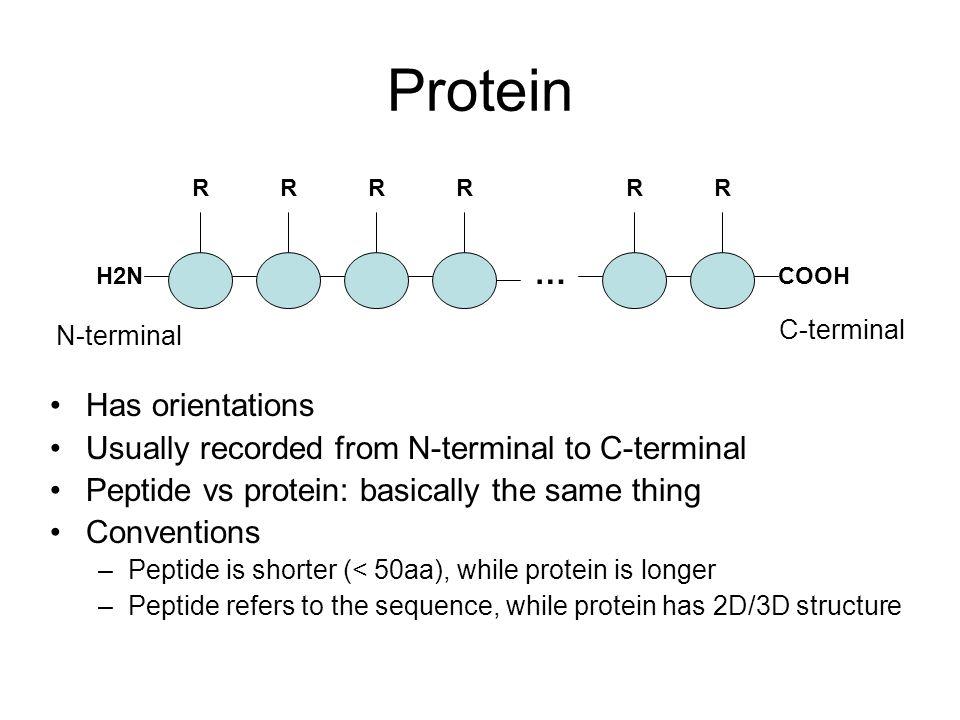 R R | | H 2 N--C--CO--NH--C--COOH | | H H R R | | H 2 N--C--COOH H 2 N--C--COOH | | H H Amino acids => peptide Peptide bond