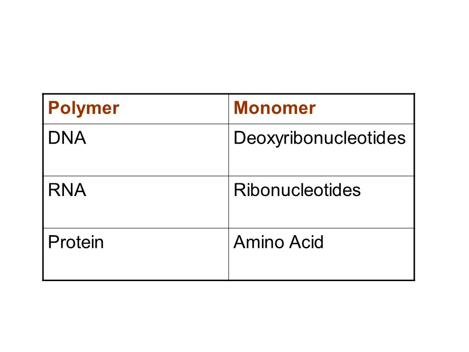 PolymerMonomer DNADeoxyribonucleotides RNARibonucleotides ProteinAmino Acid