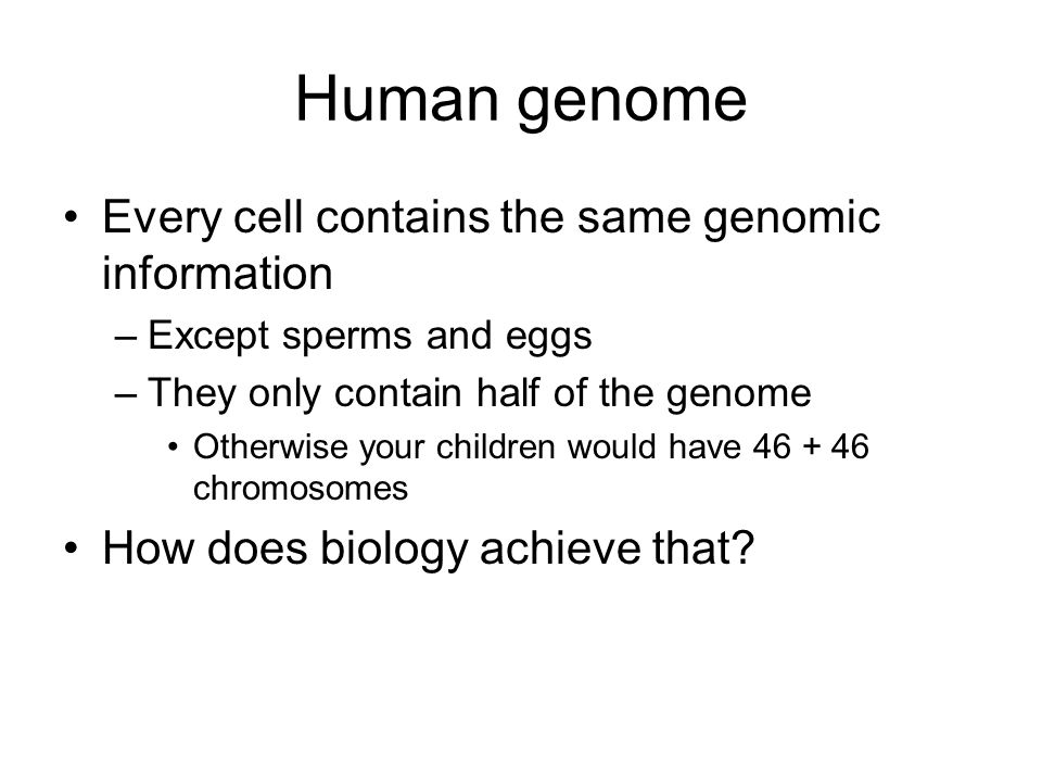 Human genome 46 chromosomes: 22 pairs + X + Y 1 from mother, 1 from father Female: X + X Male: X + Y