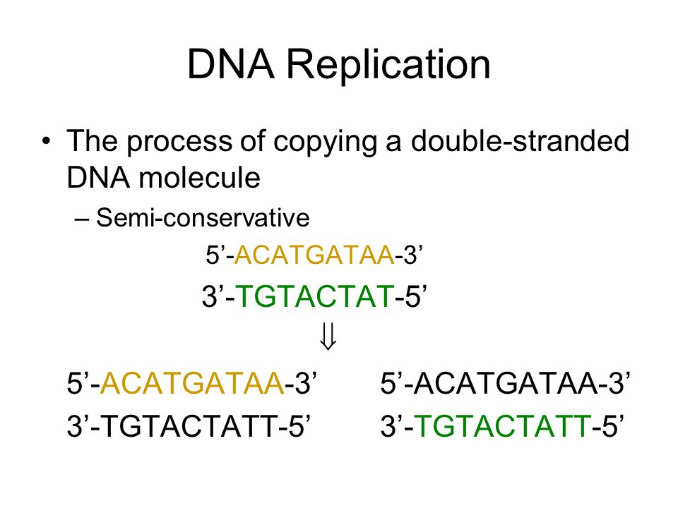 Central dogma of molecular biology DNA replication is critical in both mitosis and meiosis