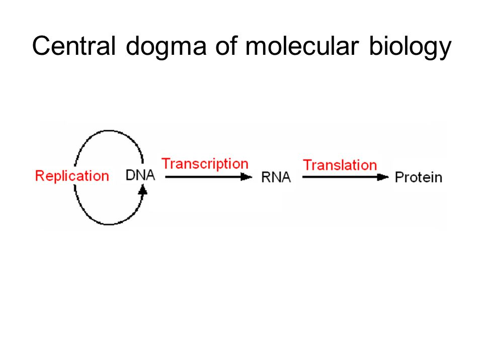 Some terms Denaturation: a DNA double-strand is separated into two strands –By raising temperature Renaturation: the process that two denatured DNA strands re-forms a double-strand –By cooling down slowly Hybridization: two heterogeneous DNAs form a double-strand –may have mismatches –The rationale behind many molecular biological techniques including DNA microarray