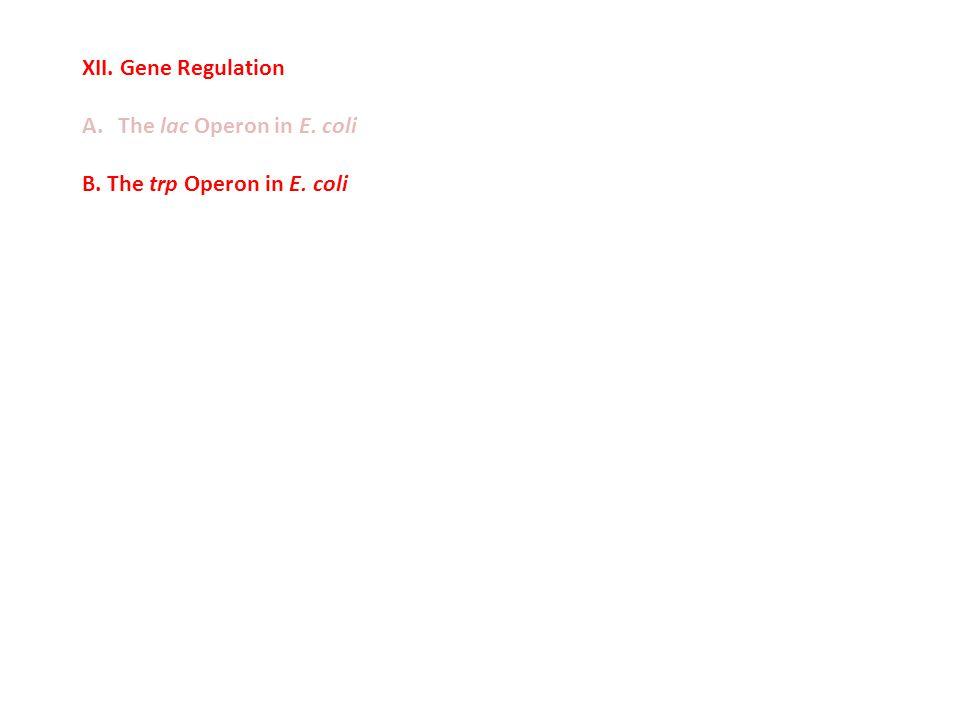 XII. Gene Regulation A.The lac Operon in E. coli B. The trp Operon in E. coli