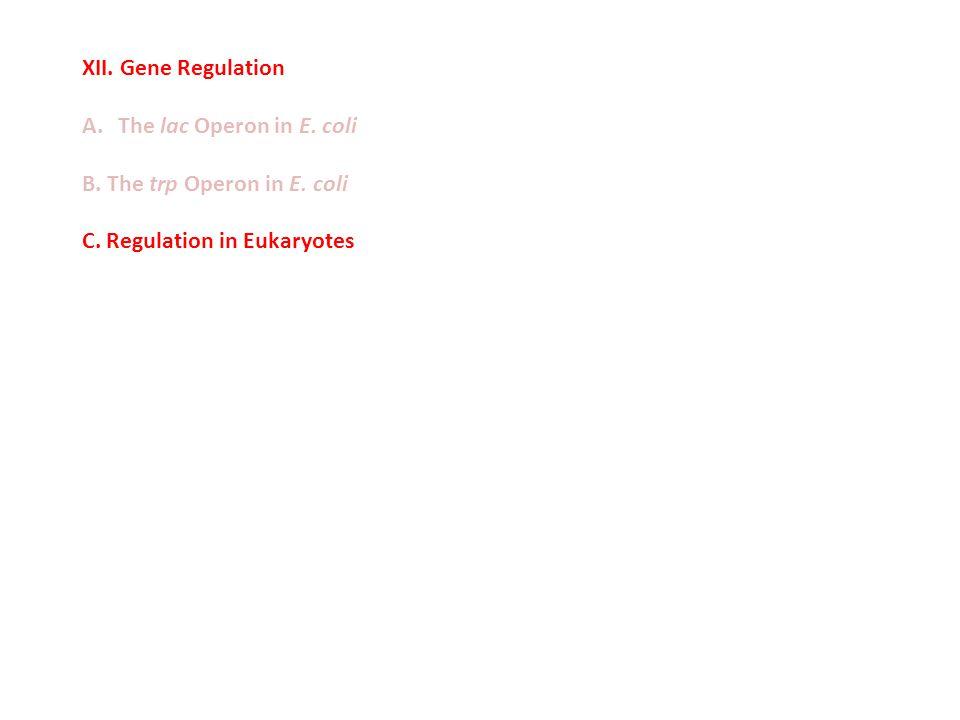 XII. Gene Regulation A.The lac Operon in E. coli B. The trp Operon in E. coli C. Regulation in Eukaryotes