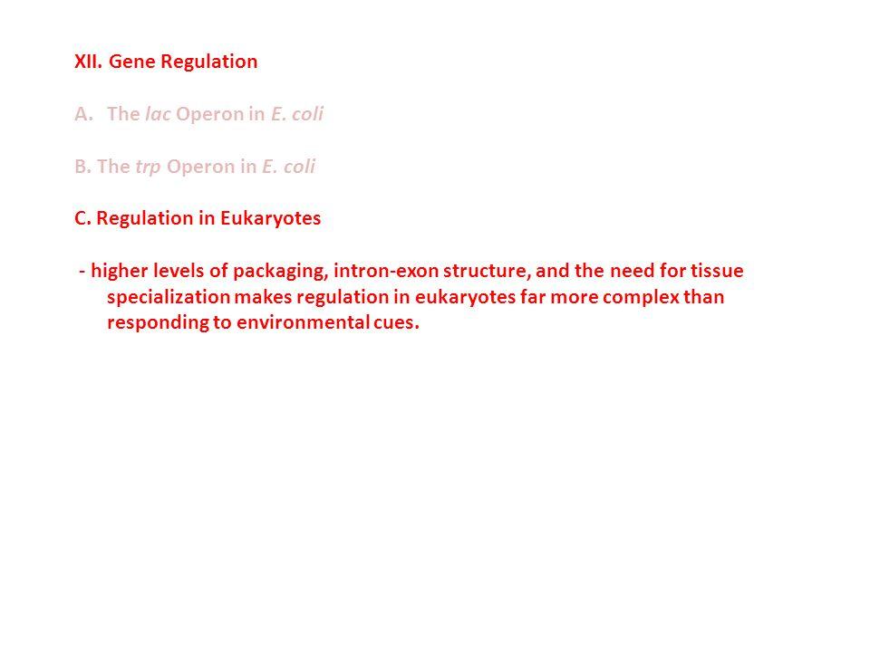 XII.Gene Regulation A.The lac Operon in E. coli B.