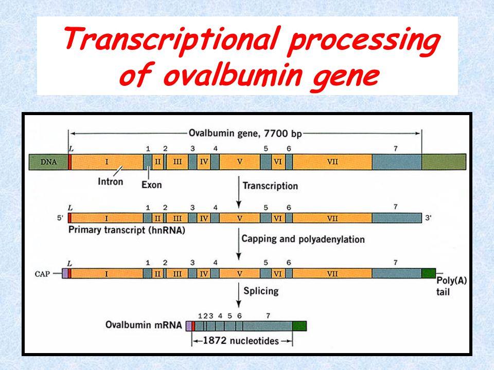 Transcriptional processing of ovalbumin gene