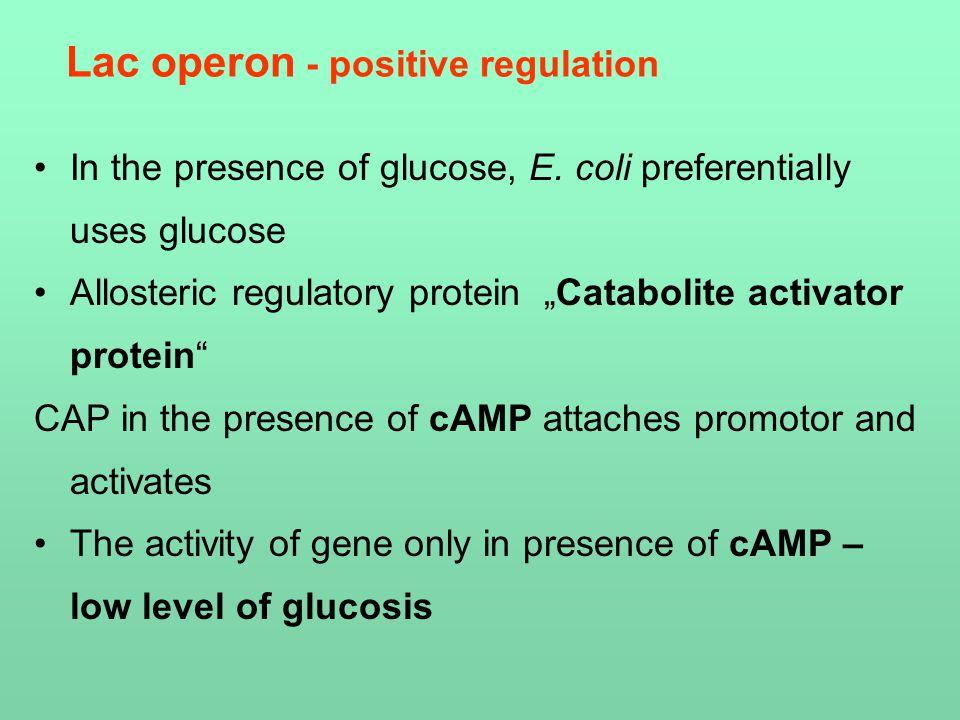 """In the presence of glucose, E. coli preferentially uses glucose Allosteric regulatory protein """"Catabolite activator protein"""" CAP in the presence of cA"""