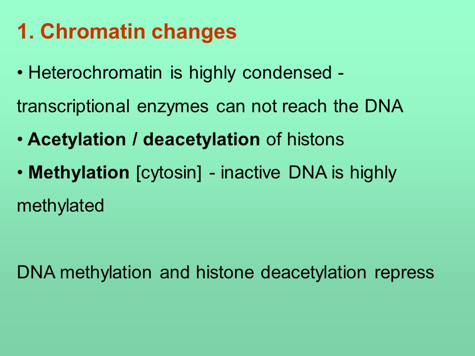 Heterochromatin is highly condensed - transcriptional enzymes can not reach the DNA Acetylation / deacetylation of histons Methylation [cytosin] - inactive DNA is highly methylated DNA methylation and histone deacetylation repress 1.
