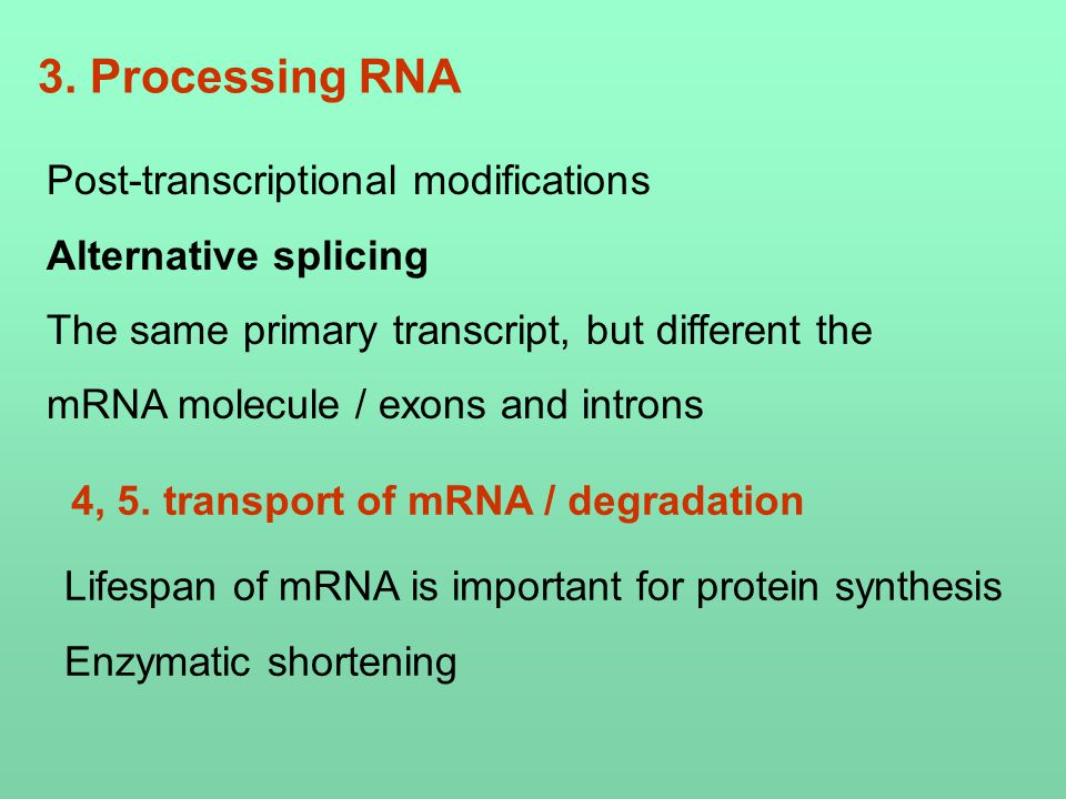 3. Processing RNA Post-transcriptional modifications Alternative splicing The same primary transcript, but different the mRNA molecule / exons and int