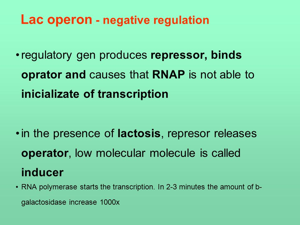 Lac operon - negative regulation regulatory gen produces repressor, binds oprator and causes that RNAP is not able to inicializate of transcription in the presence of lactosis, represor releases operator, low molecular molecule is called inducer RNA polymerase starts the transcription.