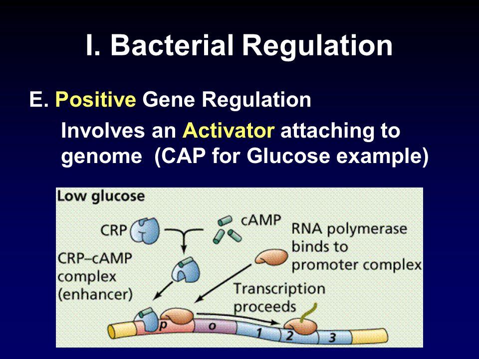 I. Bacterial Regulation E.