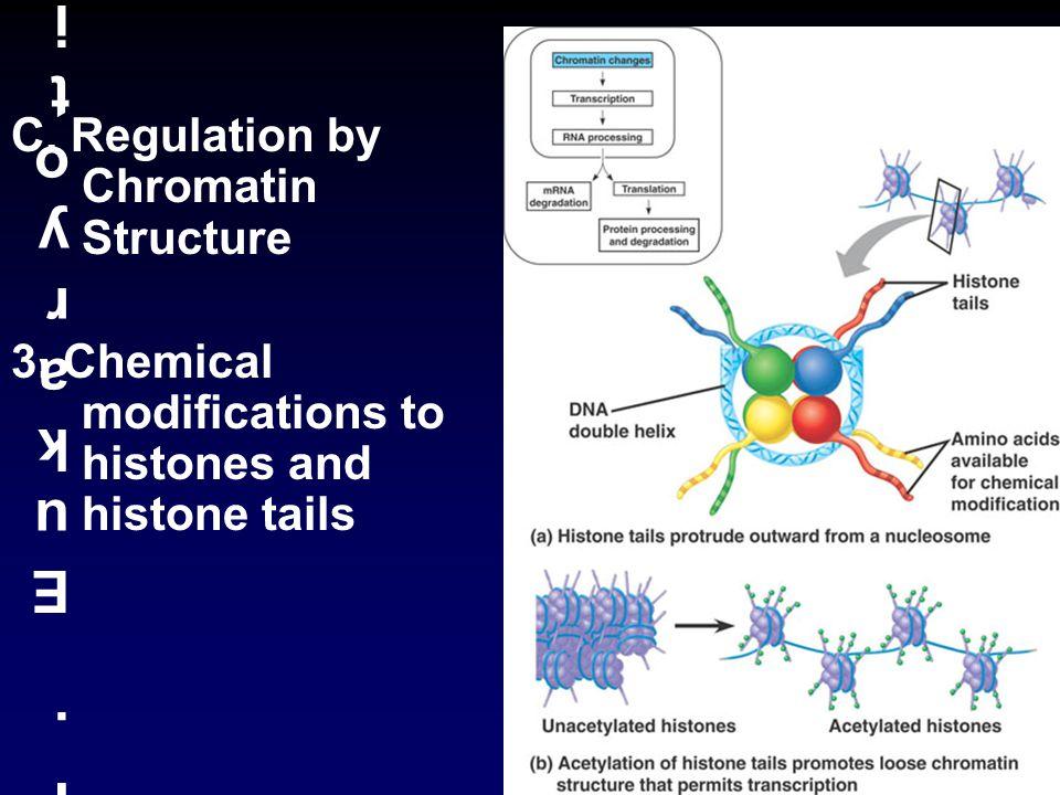 II. Eukaryotic RegulationII. Eukaryotic Regulation C.