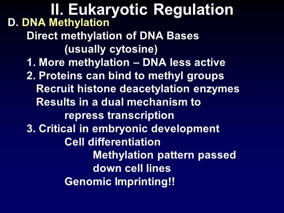 II. Eukaryotic Regulation D. DNA Methylation Direct methylation of DNA Bases (usually cytosine) 1.