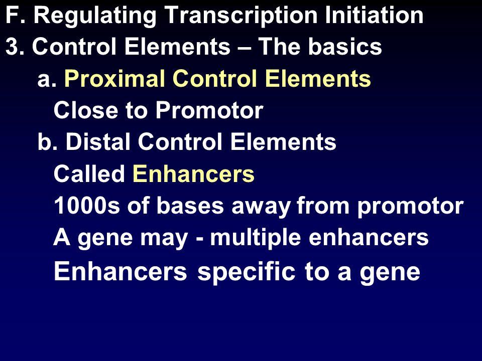 F. Regulating Transcription Initiation 3. Control Elements – The basics a.