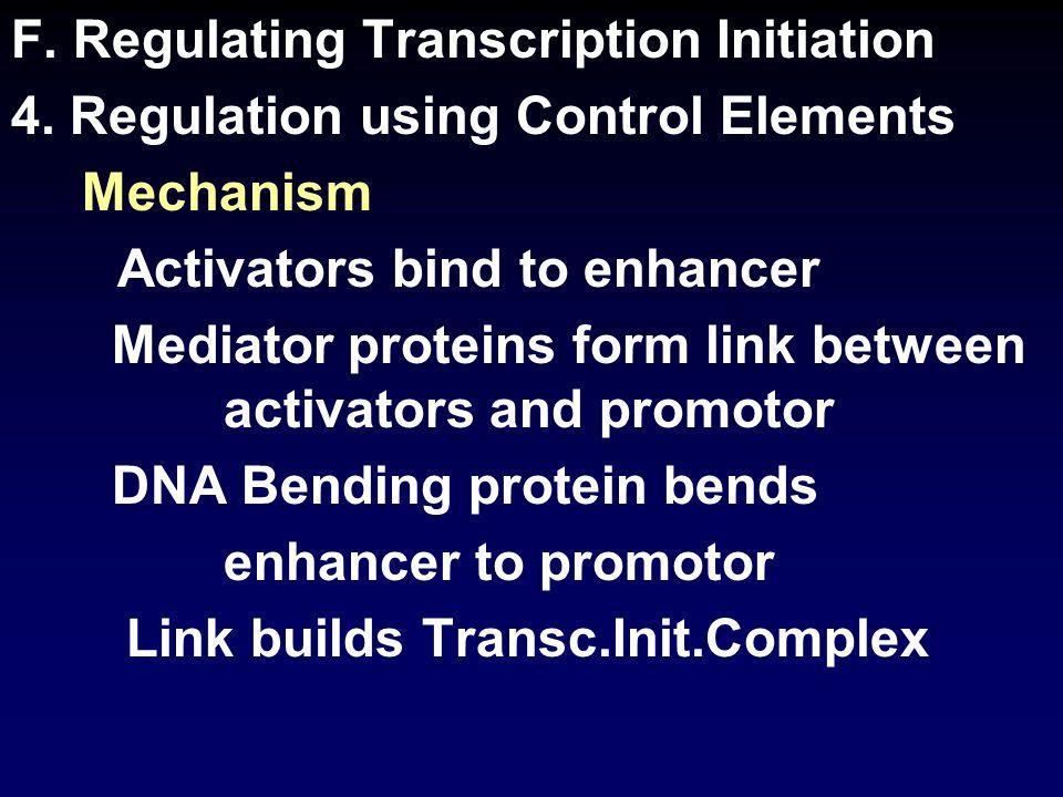 F. Regulating Transcription Initiation 4.
