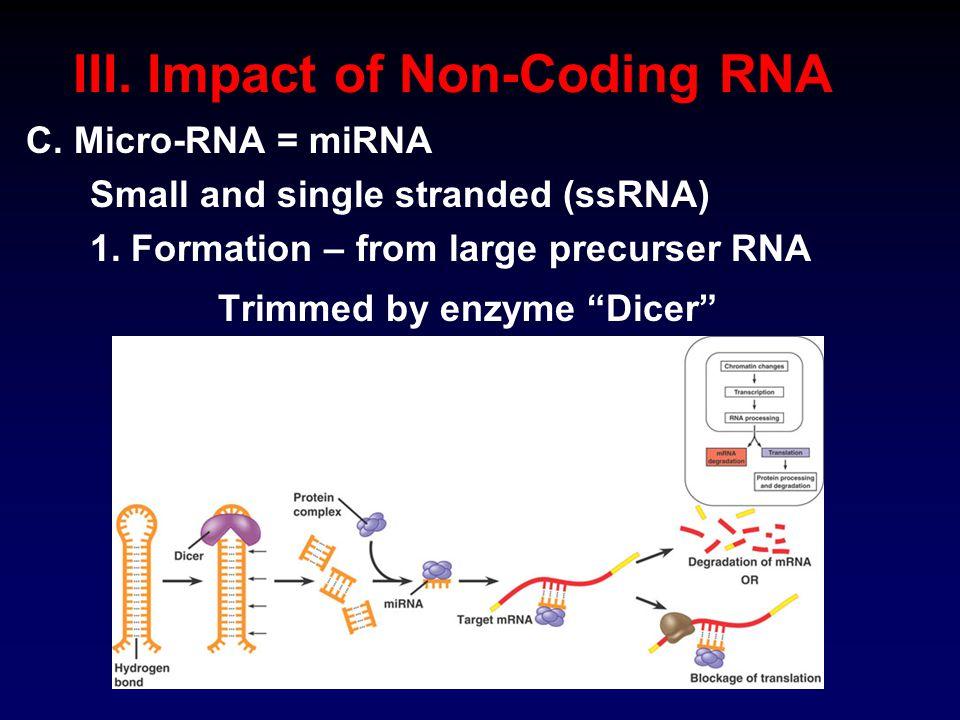 III. Impact of Non-Coding RNA C. Micro-RNA = miRNA Small and single stranded (ssRNA) 1.