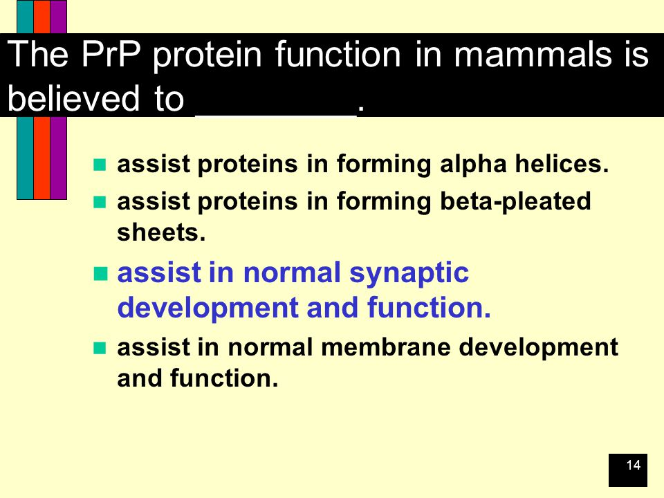 14 The PrP protein function in mammals is believed to ________.